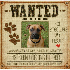 Dog Wanted Cross Stitch Kit